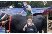 Raffi Ahmad Siap Kurbankan si Bager, Sapi Berbobot Hampir 1,4 Ton