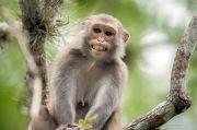 Virus Monyet Makan Korban di China, Gejalanya Hampir Mirip Covid-19
