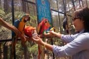 Owner Wisata di KBB Menjerit, Jual Belasan Koleksi Burung Macaw untuk Gaji Karyawan