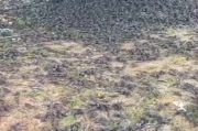Geger! Ribuan Burung Pipit Mati Mendadak di Areal Kuburan Adat Gianyar Bali