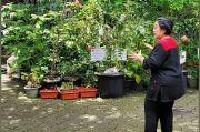 Dikabarkan Kritis di RSPP, Foto Megawati di Antara Pot-pot Tanaman Diunggah
