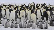 Curiga Jelmaan Alien, Ilmuwan Temukan Kotoran Penguin seperti Zat Kimia di Venus
