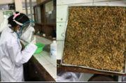 Mahasiswa UGM Manfaatkan Sekam Padi untuk Diagnosis Kanker Mulut