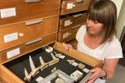 Fosil Baru Spesies Dinosaurus Lapis Baja Ditemukan di Afrika