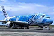 Penerbangan 5 Pesawat Ditunda 15 Menit Gara-gara Seekor Kura-kura
