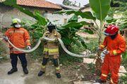 Damkar Jakarta Timur Taklukan Ular Sanca 3 Meter di Ciracas