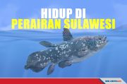 Lolos dari Asteroid Pemusnah Dinosaurus, Ikan Ini Ada di Sulawesi