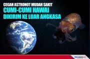 Astronot Mudah Sakit, Cumi-cumi Hawai Dikirim ke Luar Angkasa