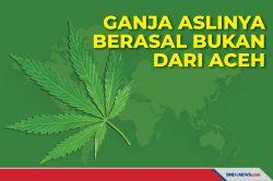 Salah Jika Beranggapan Tanaman Ganja Aslinya Berasal dari Aceh