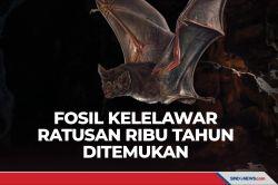 Fosil Kelelawar Berusia Ratusan Ribu Tahun Ditemukan