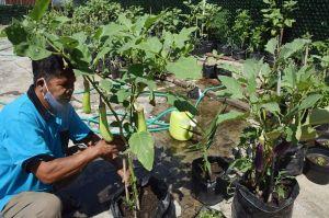 Solusi di Masa Sulit Pandemi COVID-19, Jehamu Budidaya Sayuran Organik