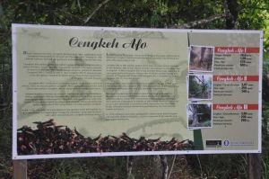 Kisah Pohon Cengkeh Tertua di Dunia yang Selamat dari Pemusnahan Belanda