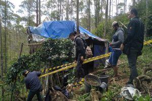 Ungkap Ladang Ganja di Hutan Lembang, Polisi Intai Pelaku selama 1 Minggu
