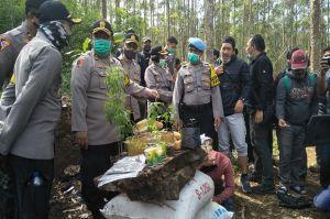 Gerebek Ladang Ganja di Lembang, Ada 36 Paket Siap Edar