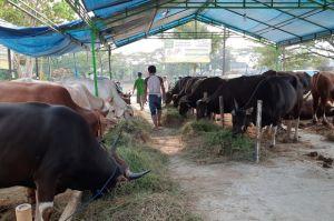 Jelang Idul Adha, Penjual Hewan Kurban Bermunculan di Jakbar