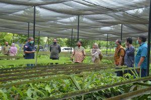 Hijaukan Kampus di Pekanbaru, KLHK Tebar 50 Ribu Bibit Pohon