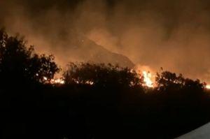 Rumah Komodo di Cagar Alam Wae Wuul Labuan Bajo Terbakar Hebat