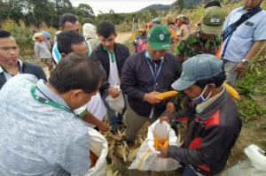 Program Entercrop, Kelompok Tani Binaan PT TPL Panen Jagung