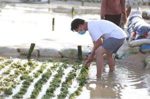Dukung Petani, Pemkab Klungkung Siap Stabilkan Harga Rumput Laut di Nusa Penida