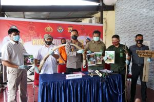 Polisi Berhasil Ungkap Kasus Kematian Gajah di Pidie
