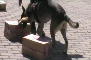 Anjing Unit K-19 Polda NTB Mampu Deteksi Sabu Dalam Kemasan