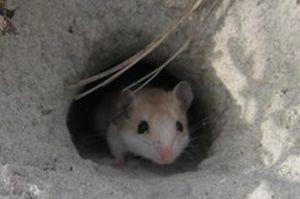 Bahaya Nifak, Lubang Tikus yang Membuat Sahabat Nabi Takut