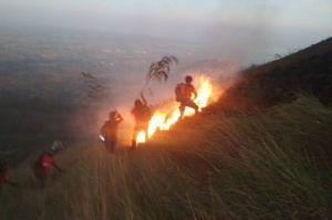 Selama Tanggap Darurat 1.587 Hektare Lahan Hutan di Riau Terbakar