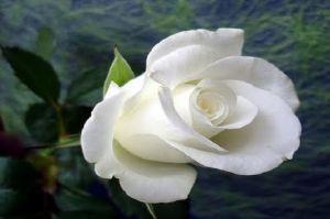 Khadijah binti Khuwailid : Perempuan Bersih nan Suci, Cinta Sejati Rasulullah