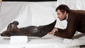 Fosil Triceratops Mona Lisa Rp41,7 Miliar Datang ke Australia