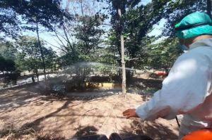 Pengunjung Anjlok 25%, Semarang Zoo Kesulitan Pakan Satwa