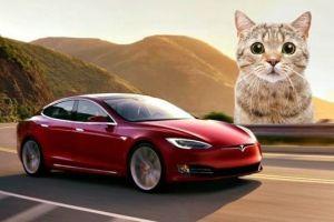 Adik Britney Spears Ngamuk ke Tesla karena Kucing Mati Terlindas