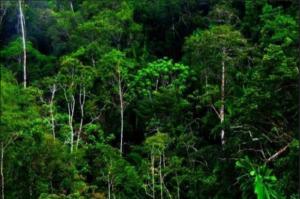 Dana Rp1,3 Miliar untuk Rehabilitasi Hutan di Padangsidimpuan Diduga Dikorupsi