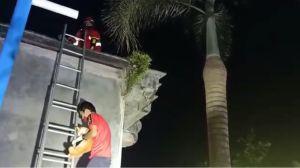 Aksi Heroik Tim Damkar Kobar Selamatkan Kucing di Atap Rumah 10 Meter