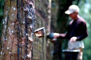 Masyarakat Kawasan Lingkungan Hutan di Tebo Jambi Diberdayakan