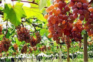Surat Al Kahfi Ayat 32-44: Kisah Pemilik Kebun yang Ingkar dan Sahabatnya yang Miskin