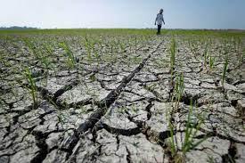 Hadapi Krisis Pangan, Kementan Tak Biarkan Sejengkal Tanah Nganggur