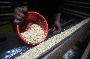 Penjualan dan Produksi Tempe Menurun, Perajin Keluhkan Harga Kedelai yang Masih Tinggi