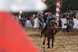 Balap Kuda Tradisional Peringati HUT Kemerdekaan RI