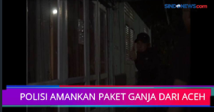 Polisi Amankan Paket Ganja dari Aceh untuk Dikirim ke Lampung