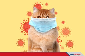 Hati-Hati, Ternyata Kucing Mudah Terinfeksi Oleh Virus Corona