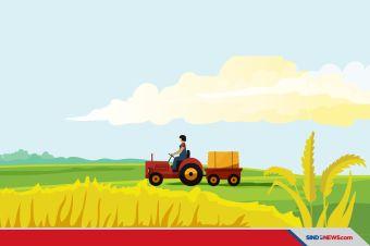Kokoh Saat Pandemi Covid-19, Waktunya Berpaling ke Sektor Pertanian