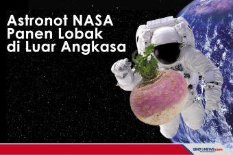 Astronot NASA berhasil Panen Lobak di Luar Angkasa