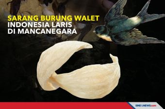 Sarang Burung Walet Indonesia Laris di Mancanegara