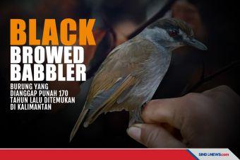 Dianggap Punah 170 Tahun Lalu, Burung Ini Muncul di Kalimantan