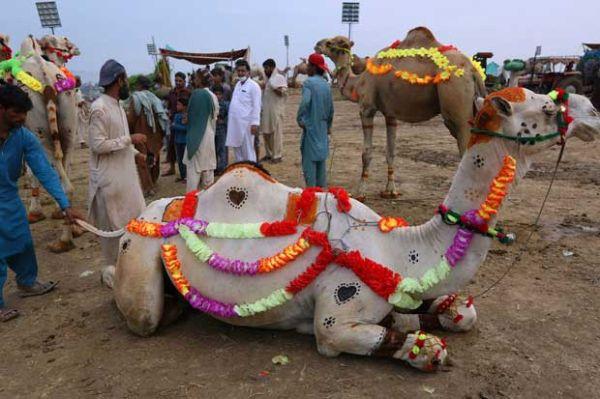 Dunia Gelar Tradisi Idul Adha, Ini Beragam Kebiasaan di Sejumlah Negara