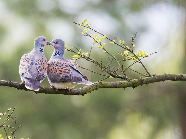 8 Hewan Romantis yang Setia Hidup-Semati dengan Pasangannya