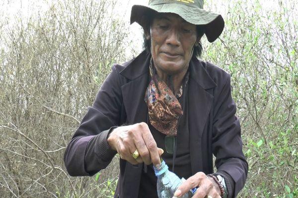 Hutan Mangrove Diserang Ulat Bulu, Peneliti: Kepompongnya Berkualitas Tinggi untuk Sutera
