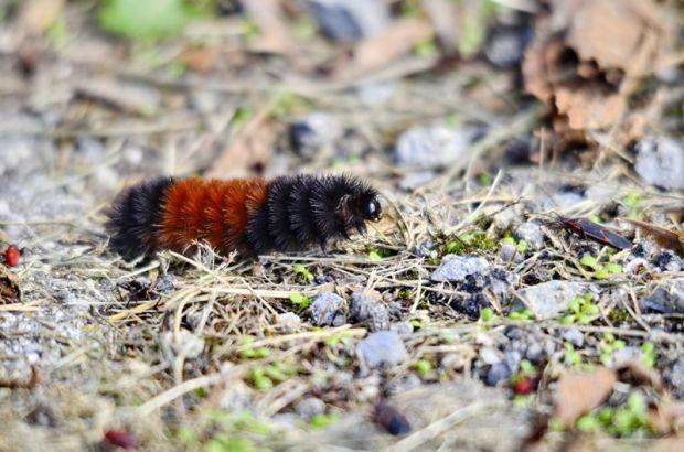 Dari yang Imut Sampai yang Besar, hewan-hewan ini Bisa Memprediksi Cuaca