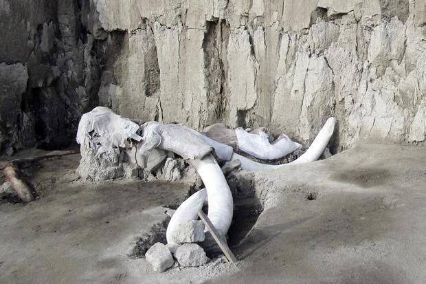 Tim Arkeologi Temukan Puluhan Kerangka Mammoth di Mexico City