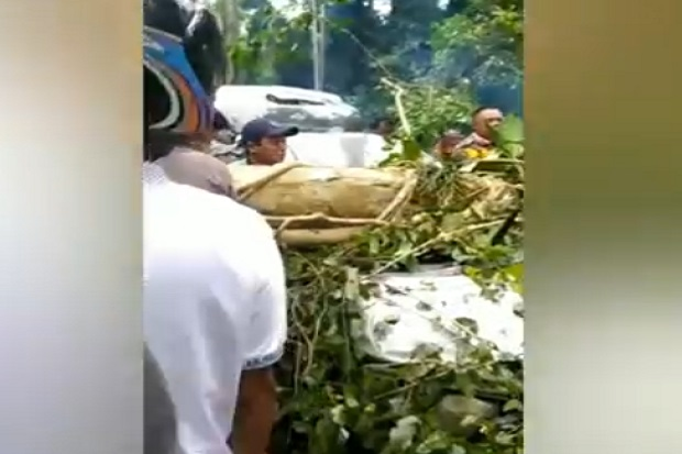 Mobil Tertimpa Pohon, Bocah 5 Tahun Anak Anggota DPRD Tewas Terjepit